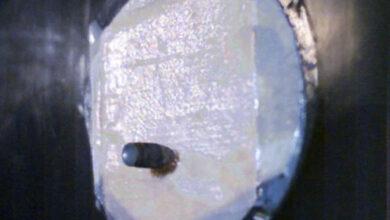 جلد الأنسان مقاوم للرصاص من خيوط العنكبوت وجلد الماعز