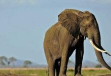 دعوى قضائية من فيل ضد حديقة الحيوان تعرف التفاصيل