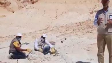 اكتشاف حوت منقرض في السعودية بقايا قبل 37 مليون سنة